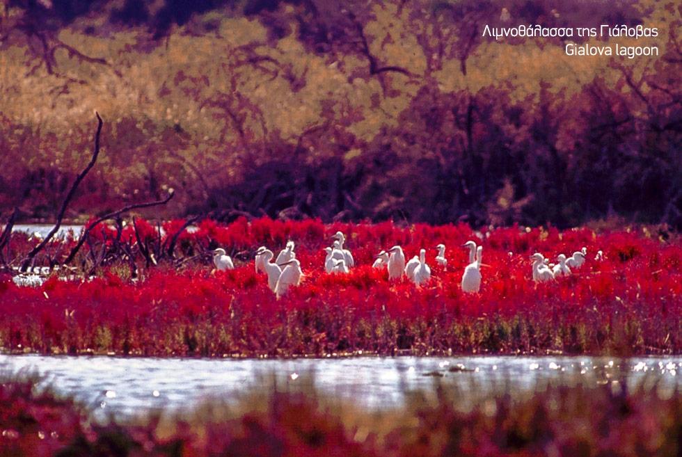 Costa Navarino. Gialova lagoon in messinia Greece. Migrating birds. Discover Greece