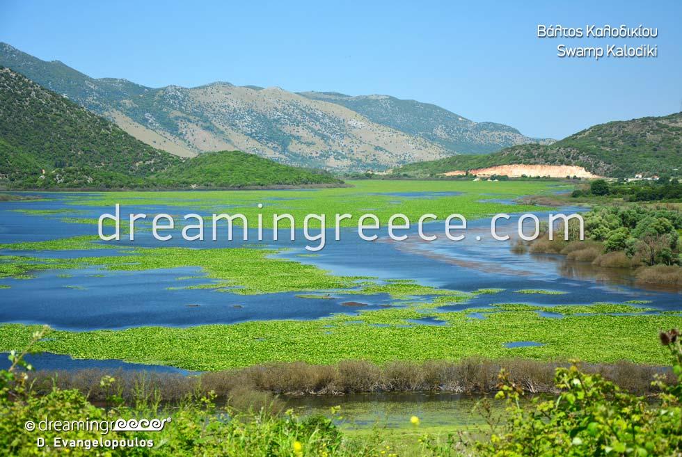 Kalodiki Swamp Epirus Greece