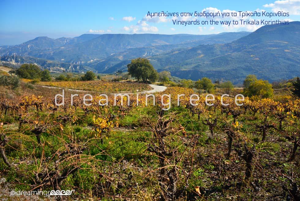 Wineyards Trikala of Corinth Peloponnese Greece