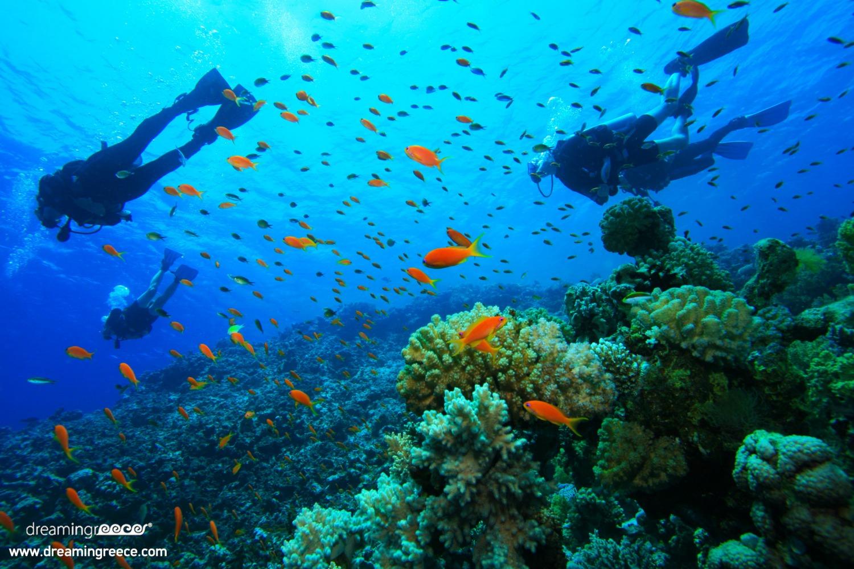 Scuba Diving in Greece Dive Activities Diving Centers Greece
