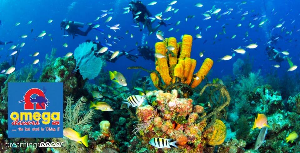 Omega Divers Chania Crete Scuba Diving in Chania Greece. Diving Centers Greece