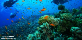 Scuba Diving in Greece Dive Activities Diving Centers Greece